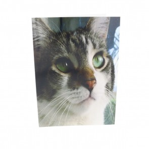 Gray and White Cat with Green Eyes Card