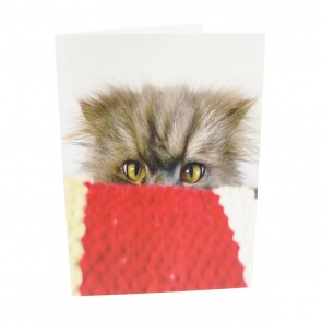 Cat with Quilt Card