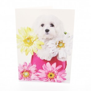 Maltese with Flowers Card