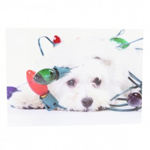 Maltese with Holiday Lights Card