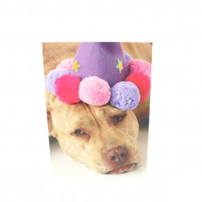 Sad Pit Bull with Pompom Hat Card