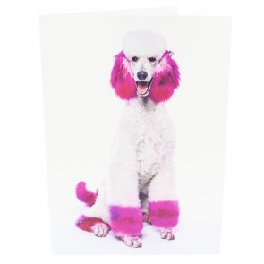 White Poodle with Pink Fur Card