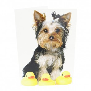 Yorkie With Ducks Card